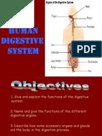 Slide Human Digestive_SCF2NUTRITION
