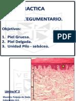UHISTOLOGIA 2014 - TEGUMENTARIO