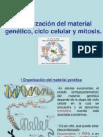 Ciclo Celular y Mitosis II Medio JMS