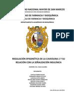 REGULACIÓN EPIGENÉTICA DE LA CAVEOLINA-1 Y SU RELACIÓN CON LA SEÑALIZACIÓN INSULÍNICA