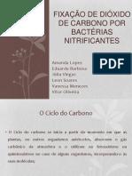 Artido de Microbiologia