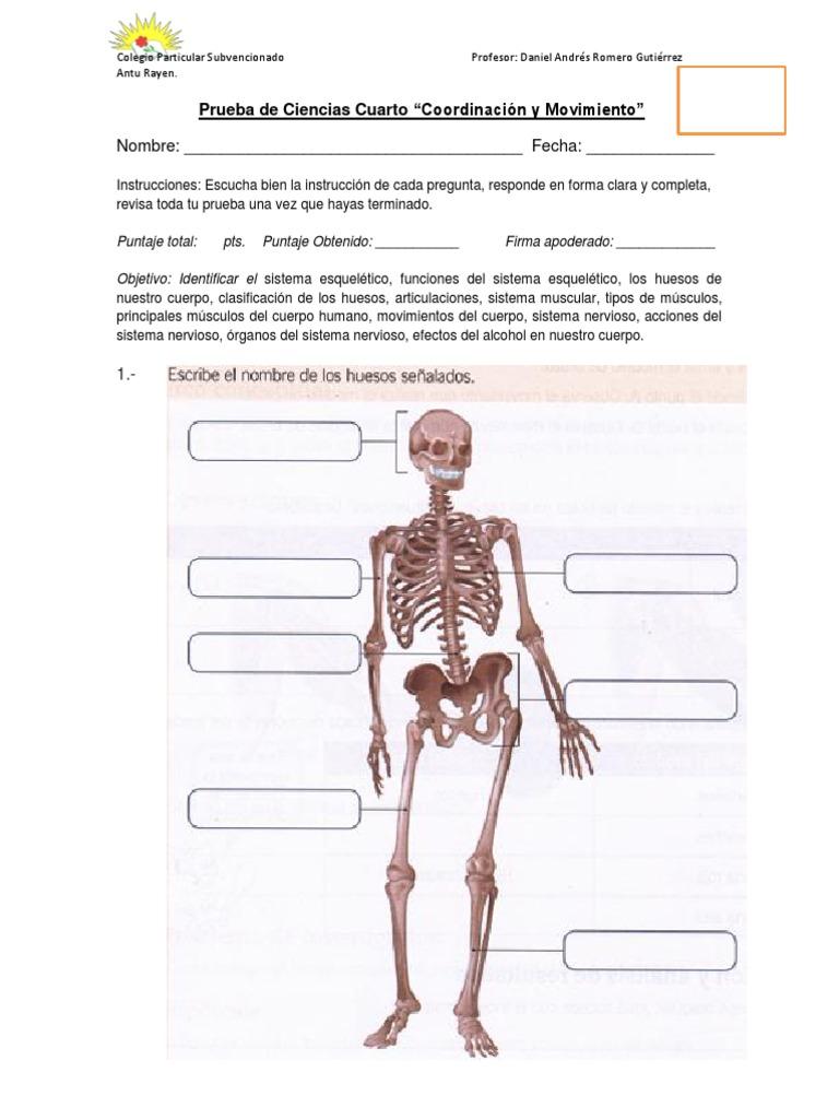 Magnífico Nombres De Todos Los Huesos En El Cuerpo Humano Molde ...
