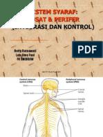 Nervous System PSIK