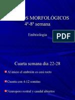 2.-cambios morfológicos 4a-8a sem.