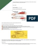 epitrocleitis