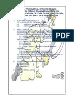 Estudio Transversal o Transeccional PDF