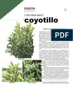 Coyotillo.pdf_1201 (1)