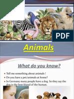 7th 03 animals