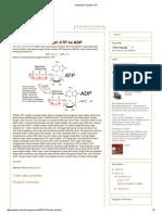 Edelwis_ Struktur Atp