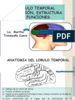 3.5 - Lobulo Temporal