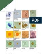 atlas de parasitologa.docx