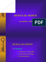 127170 Muscular System