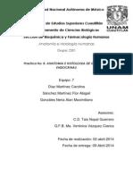 Anatomía e histología de glándulas endócrinas