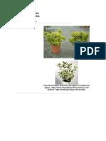 Plantas Descripcion Paisaje - Armando