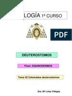 Tema32. EQUINODERMOS