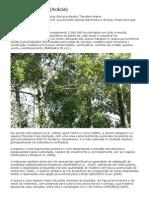 Acácia - Acacia mangium - Ficha da Planta