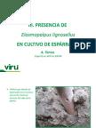 3presenciaenesprrago-130304171303-phpapp01