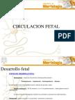 circulacionydesarrollofetal-121209182550-phpapp02