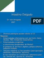 17) Intestino Delgado