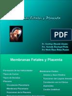 011 Placenta