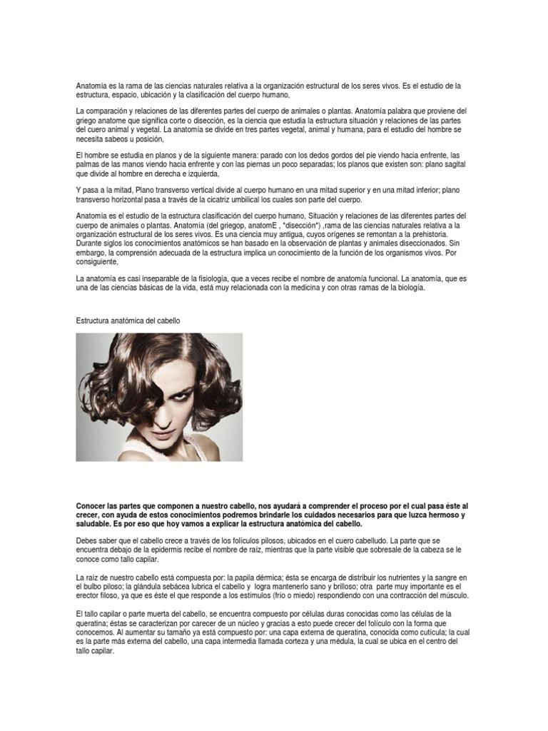 Excelente Anatomía De La Raíz Del Cabello Viñeta - Anatomía de Las ...