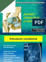 Ortopedia. Anat y Ef Cadera