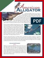 American Alligator Brochure