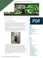 Caracoles gigantes, Fásmidos y Gusanos de seda_ TIPOS DE ESCARABAJOS