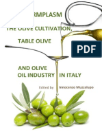 Olive Cultivation Italy