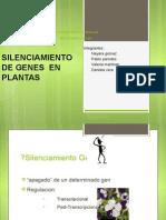 Silenciamiento de Genes en Plantas
