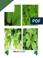 Ökologische Anpassung von Blättern.pdf