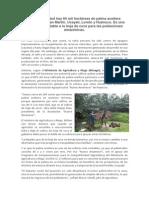 En la actualidad hay 60 mil hectáreas de palma aceitera instaladas en San Martín