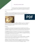 Etologia - Miedo, Fobia Y Ansiedad en Gatos