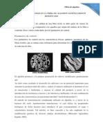 CONTROL DE CALIDAD EN LA FIBRA DE ALGODÓN GENÉTICAMENTE       MODIFICADO