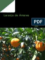 Manual Produtor Laranja