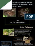 Ekologi dan Konservasi Katak Sawah di Indonesia