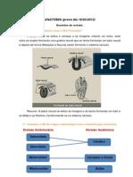 Resumo Anatomia
