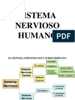 Sistema Nervioso Humano-I