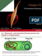 Chapter 11 Genetics