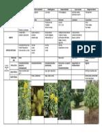 Tabla Plantas
