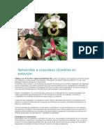 Salvavidas a orquídeas silvestres en extinción