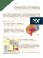 La teoría del Cerebro