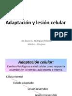 Adapatación y lesión celular