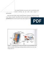 Embriologi Usus Sederhana Belakang