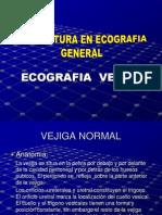ECOGRAFIA__VESICAL