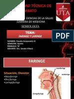 Faringe y Laringe - Claudia Guayasamin