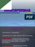 Angiospermas Completo