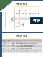 05 Pines Ciclos v0 (1)