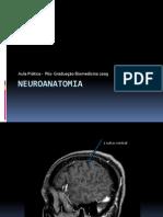 Exercicio Neuro