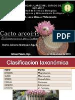 Cacto arcoiris (Echinocereus pectinatus) Descripcion de la especie.